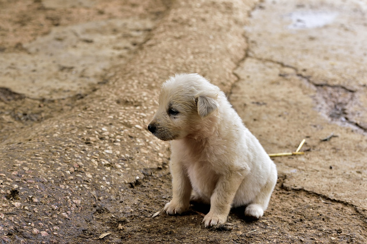 dog, small, young